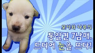 7 puppies finally opened their eyes up and they are so cute that I ...