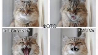 Кошки   прикольные картинки