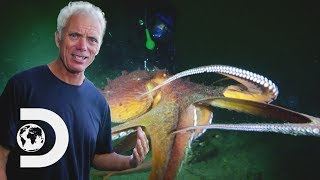 Jeremy May Have Found The Lusca Monster Of The Blue Holes | River Monsters