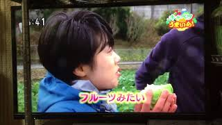 磐田市の特産、天使のキャベツの紹介.