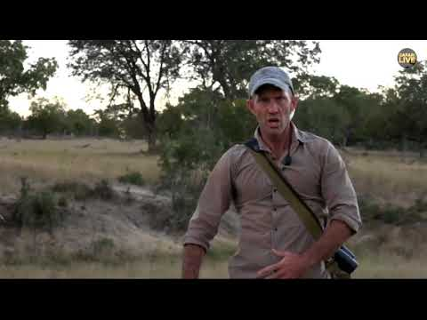 James Hendry Sings The Gummy Bears Song On SafariLive