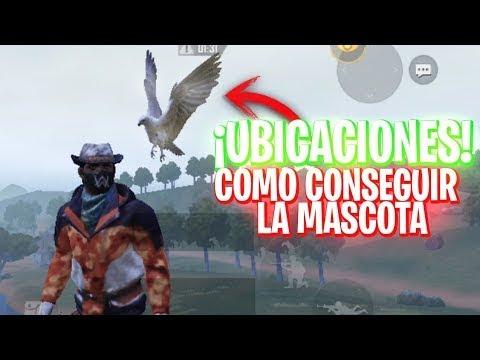 Como Conseguir La Mascota Aguila En Pubg Mobile Atrapa Tu Halcón Gratis En La Nueva Versión Youtube