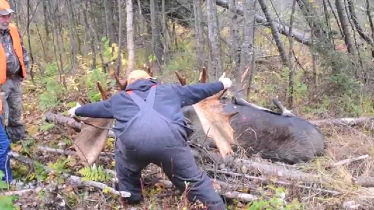 2013 Maine Moose Hunt Northern Maine Allagash Youtube