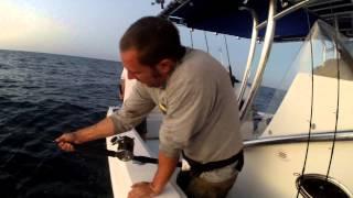 Amberjack DONKEY Gulf of Mexico 80+ Pound AJ Fishing. BACK BREAKER!