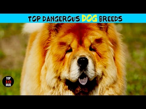 TOP 10 Most Dangerous Dog Breeds