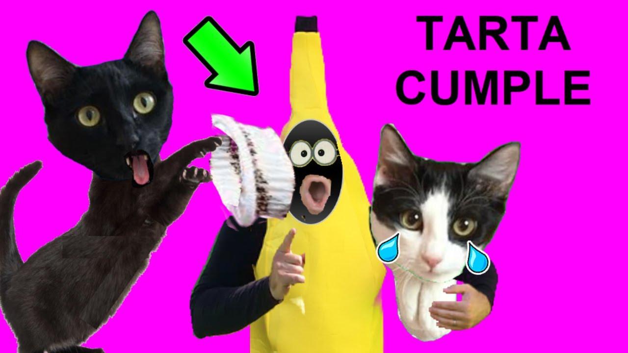 Gato reaccionando al hombre banana vs tarta de cumpleaños de gatos Luna y Estrella VIDEOS DE GATITOS