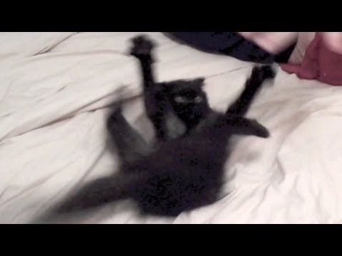 How to calm down a crazy kitteh!