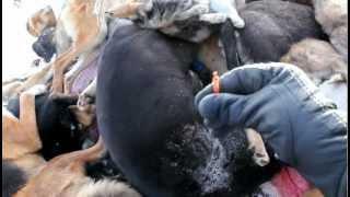 Беспредел! Новые трупы животных на городской свалке.mp4