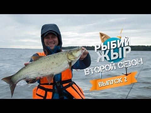 на что клюет жерех трофейной рыбалке