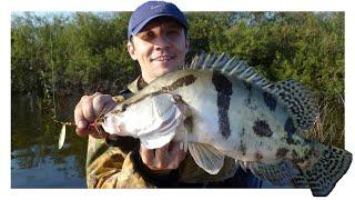 Чудо рыба Ауха на реке Амур