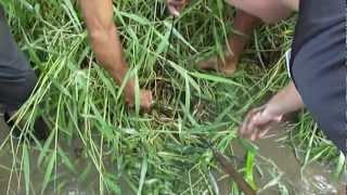 Spearing eel in Fiji