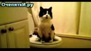 Мои кот ходит в туалет