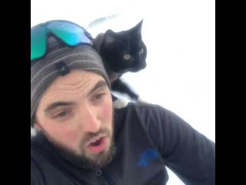 Thumbnail: Sledding with my cat.