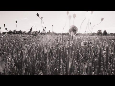 Kelsea Ballerini - overshare (ballerini album version) [Official Lyric Video]