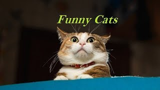 #funniest #hilarious #kitten #kitties It's TIME for SUPER LAUGH! - Best FUNNY CAT videos