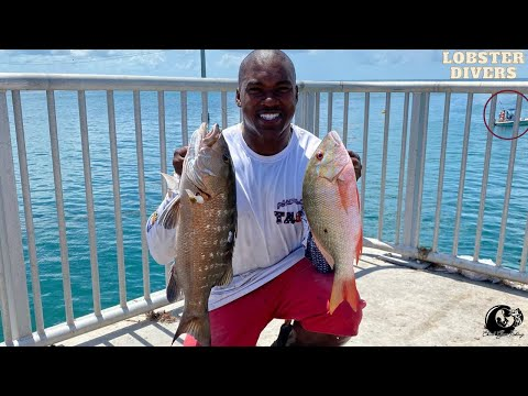 CUBERA & MUTTON Snapper CAUGHT! Florida Key's Bridge Fishing (PESKY Lobster Divers SURROUND US!)