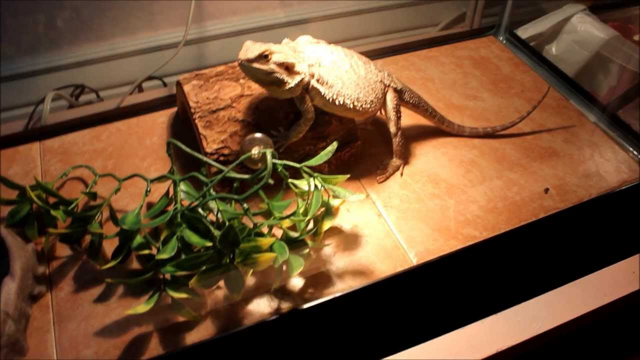 Using tile in reptile cages! - YouTube
