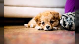 Самые милые фото животных.