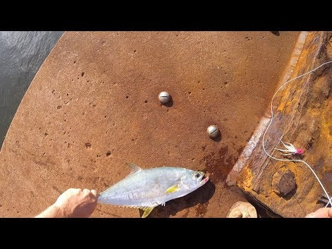 CAPE YORK: Flyfishing For Queenfish At Seisia Wharf - March 2019