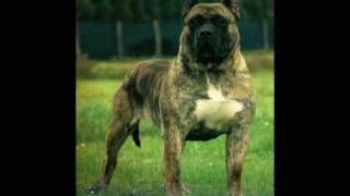 PRESA CANARIO THE ULTIMATE GUARDIAN