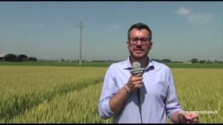 Piattaforma Cereali a paglia - in campo con S. Ballerini BASF