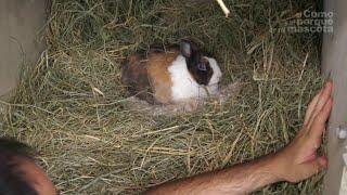 KRÓLIKI – Poród króliczki. Jej młode. (cz. II)