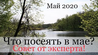 Что посеять в мае ? 2020 год