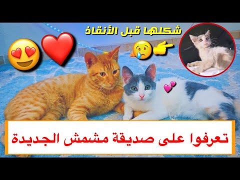 تعرفوا على القطه الجديده صديقة مشمش 😍 شوفوا شكلها قبل الانقاذ 😔💔 / Mohamed Vlog