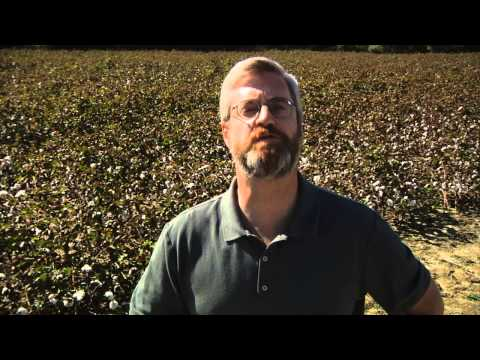How the Cotton Gin Changed America