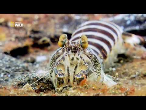 Gli animali più pericolosi: A sangue freddo Ep2 Predatori dal profondo