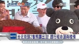 台北街頭2隻熊讚出沒 趕行程命運兩樣情 三立新聞台