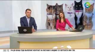 В Минске стартовал кастинг котят на главную роль в мюзикле