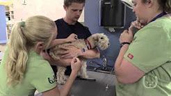 South Bay Veterinary Hospital Insurance Options