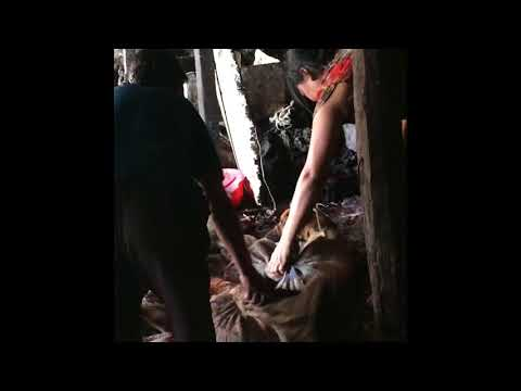 ✦INSIDE INDIA'S ILLEGAL BARBARIC DOG MEAT TRADE✦