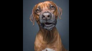 Прикол! Смешная собака бегает по кругу за мячиком!