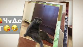 Приколи про котів Чудо кіт