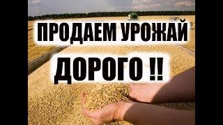 как продать пшеницу по максимальной цене?