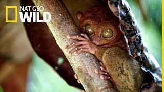 Wspaniałe Filipiny na Nat Geo Wild