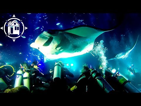 Crazy Scuba Dive w/ Spectacular GIANT MANTA RAYS in Hawaii!