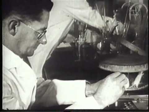 mijlpalen in de biologie: Alexander Fleming, Howard Florey, Ernst Chain, Penicilline