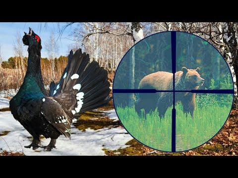 Охота на глухаря, увидели в прицел медведя.