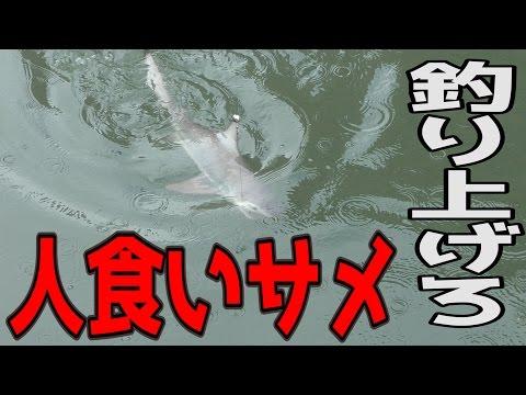都会の川にいる人食いサメを泳がせ釣りで狙う!【人食いオオメジロサメ】