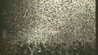 Tom Waits - Tango Till They're Sore (live 1999)