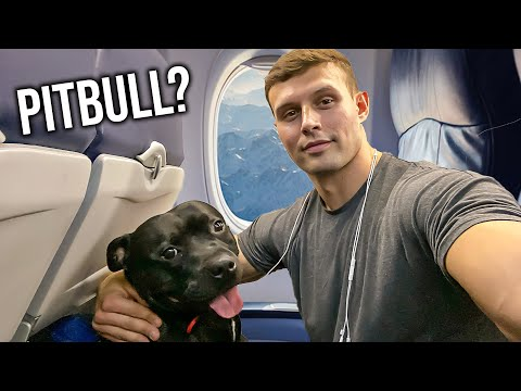 How To Fly ANY Breed For Free