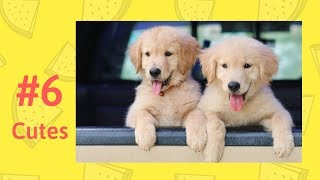 Cute Animals #6 Funny animals compilation 2018 TikTok