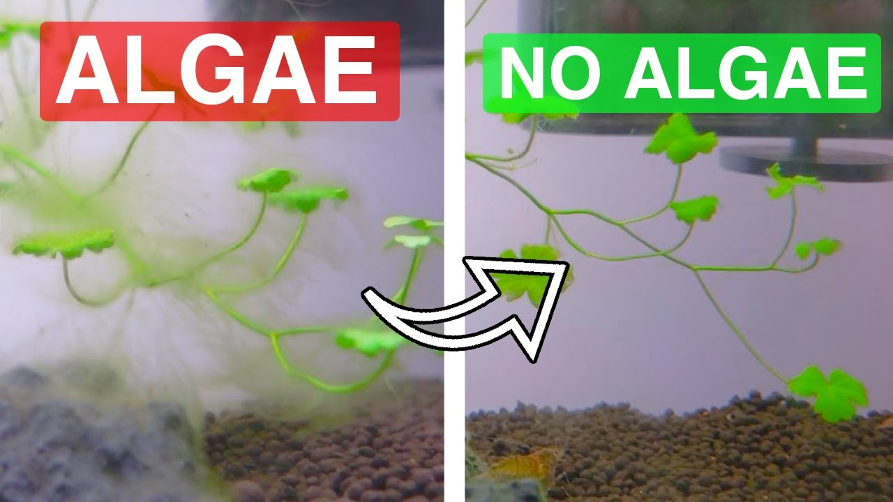 how I DESTROYED this algae infestation IN A WEEK