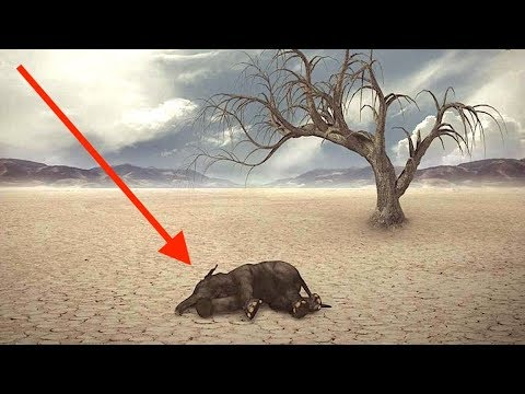 What They Won't Tell You About The 6th Extinction