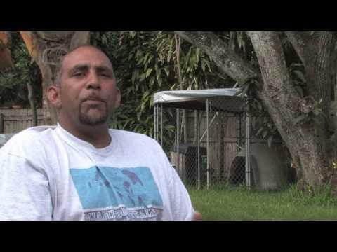 Dog Training & Care : Breeding Yorkies