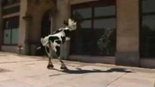 Repeat youtube video Crazy dancing cow  - Funniest video of the week