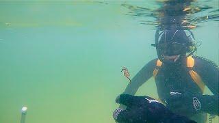 Подводный коп. В ПОИСКАХ РЕАЛЬНОГО ЗОЛОТА-ЗОЛОТО, СЕРЕБРО, МОНЕТЫ./HD